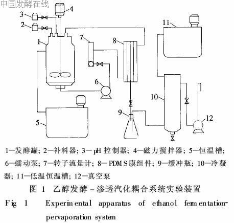硅橡胶膜生物反应器中乙醇发酵与渗透汽化的耦合
